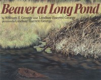 Beaver at Long Pond by Lindsay Barrett George