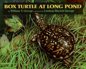 Box Turtle at Long Pond illustrated by Lindsay Barrett George